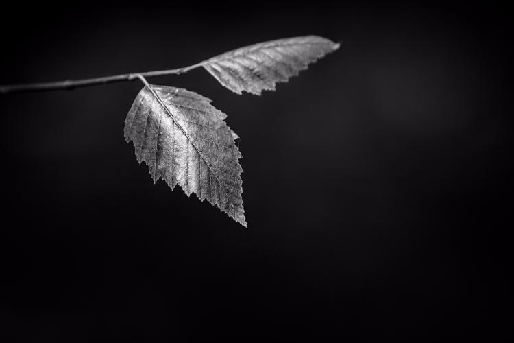 **Basking Darkness - abstract, photography - mbstuart | ello