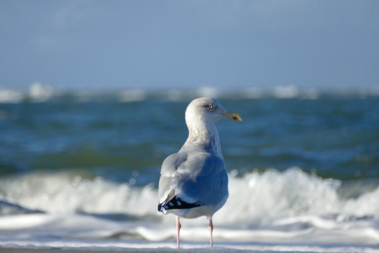 Eye Seagull - sabine | ello
