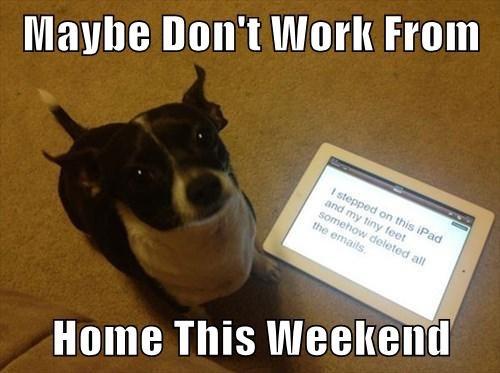 dog - Happy Friday - happyfriday - rxmobility   ello