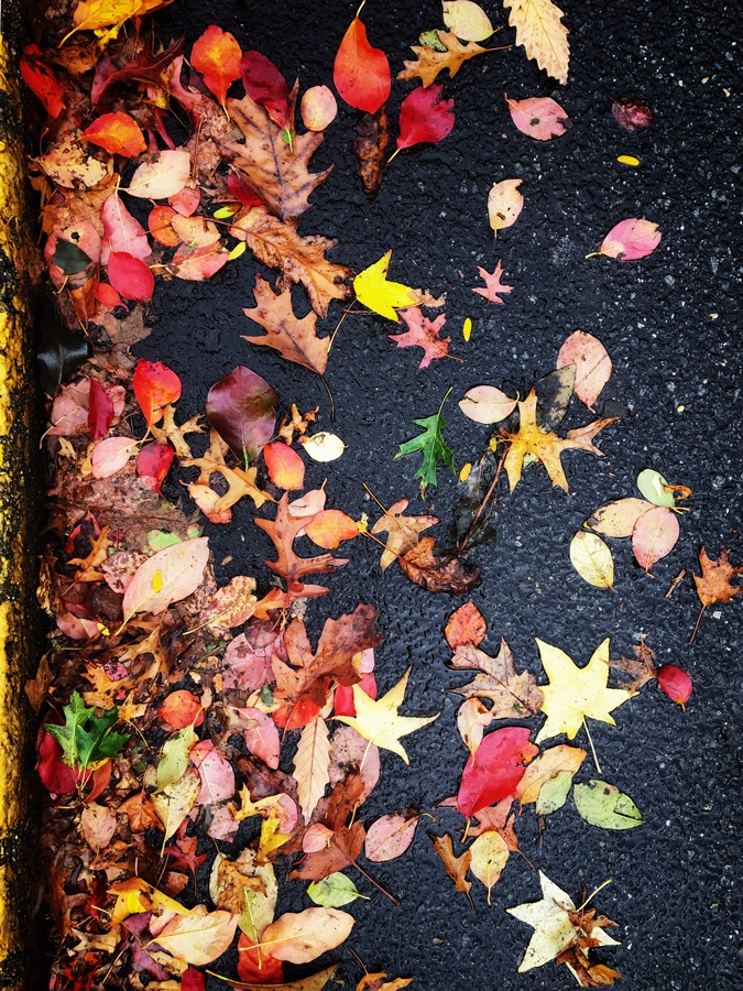 Colors Fall - streets, nature, ello - halehj | ello