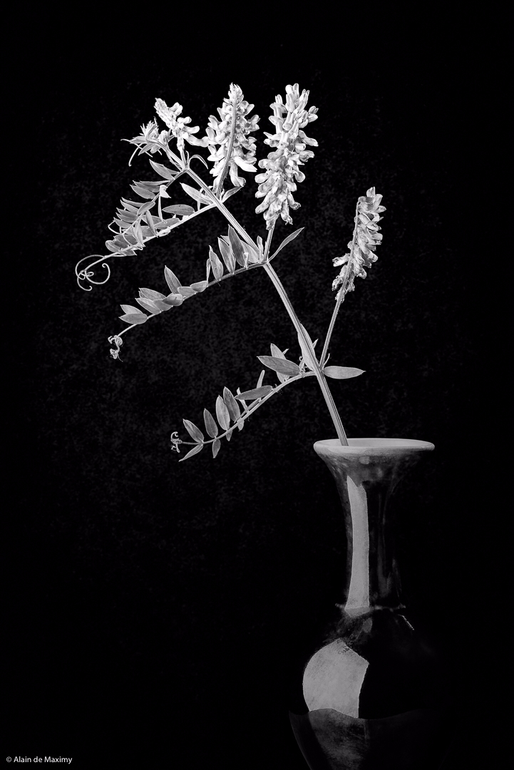Alfalfa Vase Dark Background - alfalfa - maximy | ello