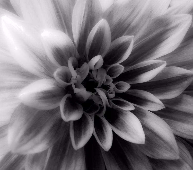 blackandwhitephotography, photography - vincentvicari | ello