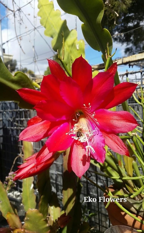 Beauty garden... unknown hybrid - ekoflowers | ello