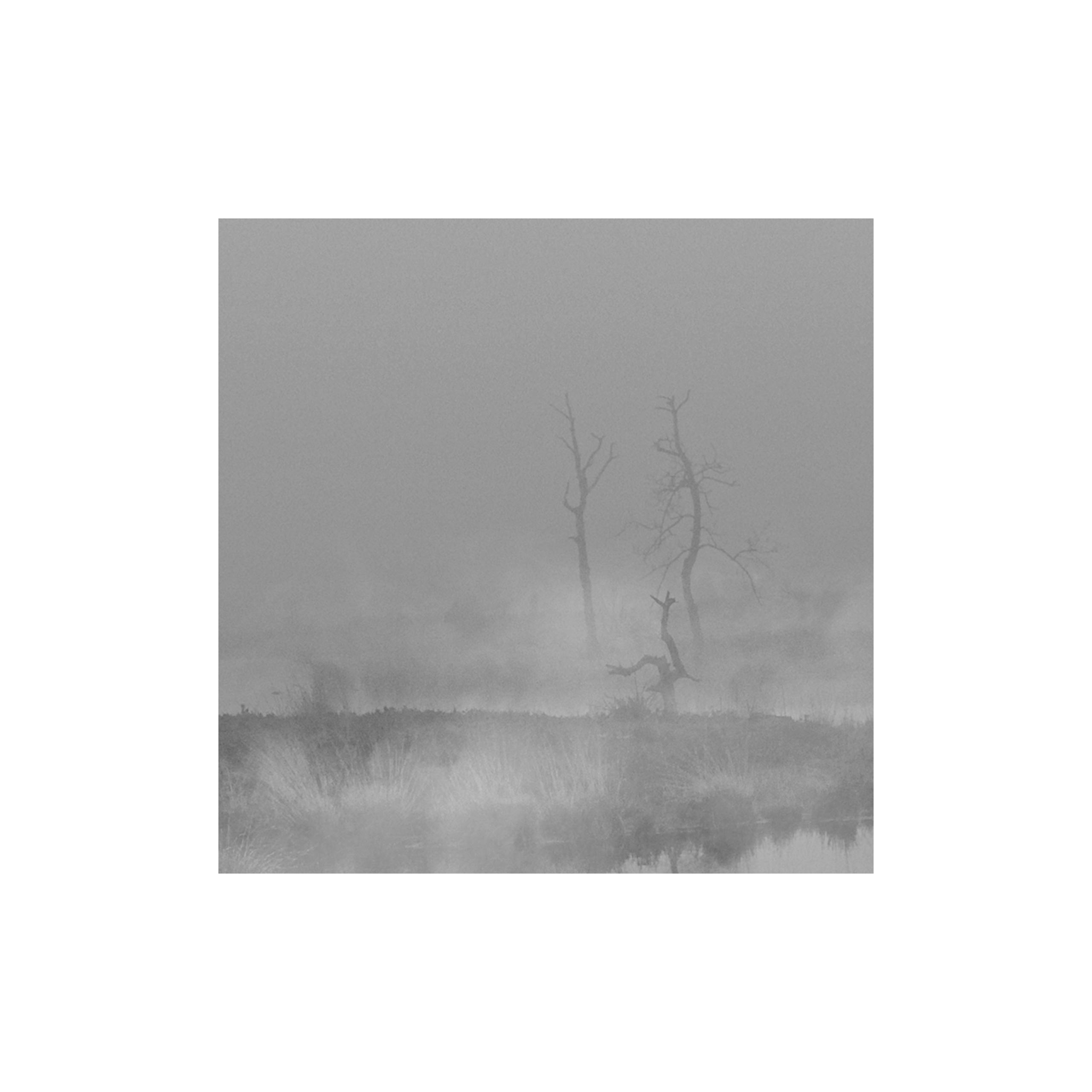 monique2211 Post 05 Nov 2017 12:33:15 UTC | ello