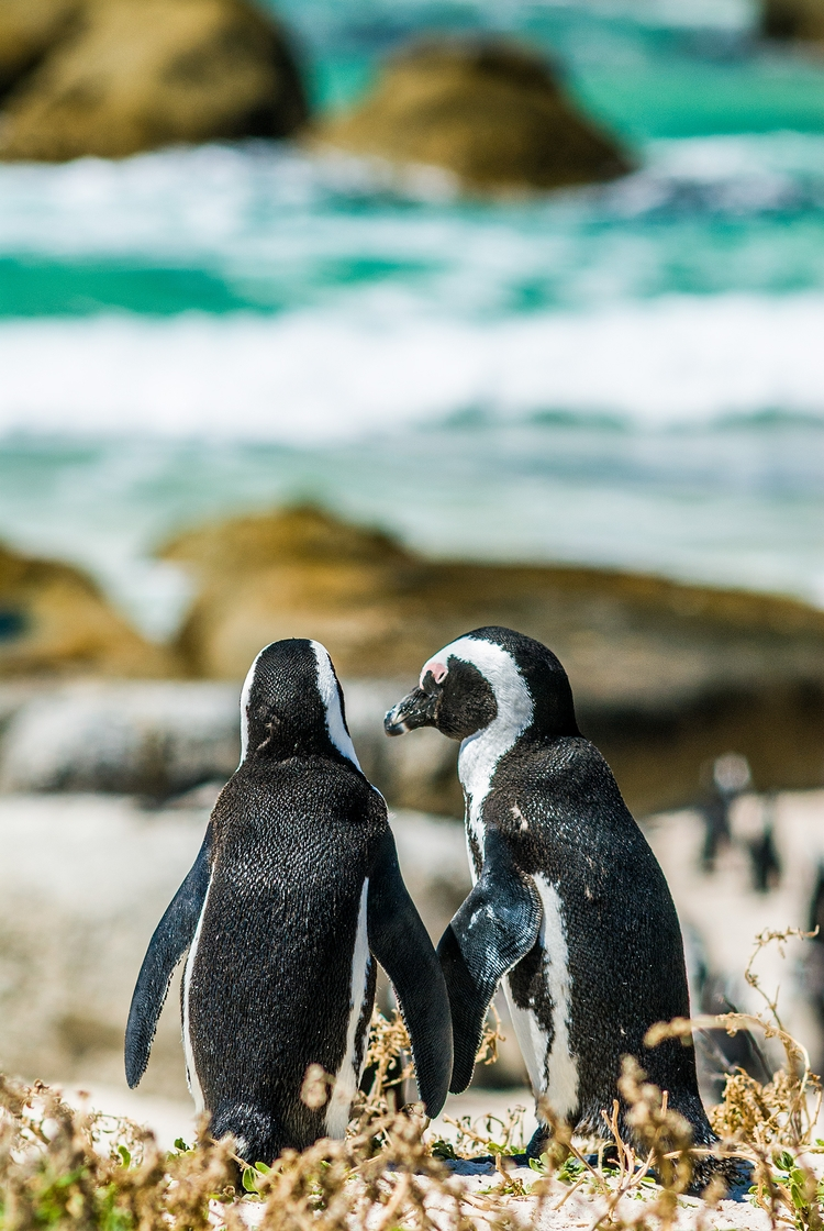 lovers sun - SouthAfrica, penguins - christofkessemeier | ello