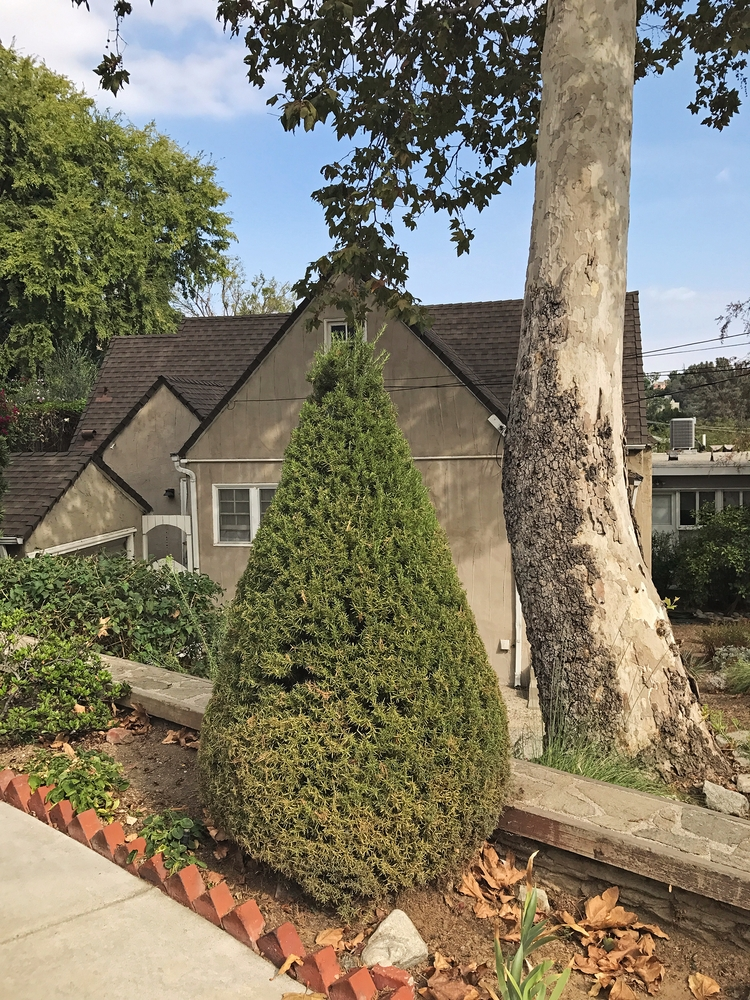Conical Topiary, Castle St, Sil - odouglas | ello