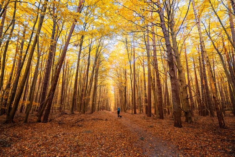 Splendid autumn foliages spotte - phigun   ello