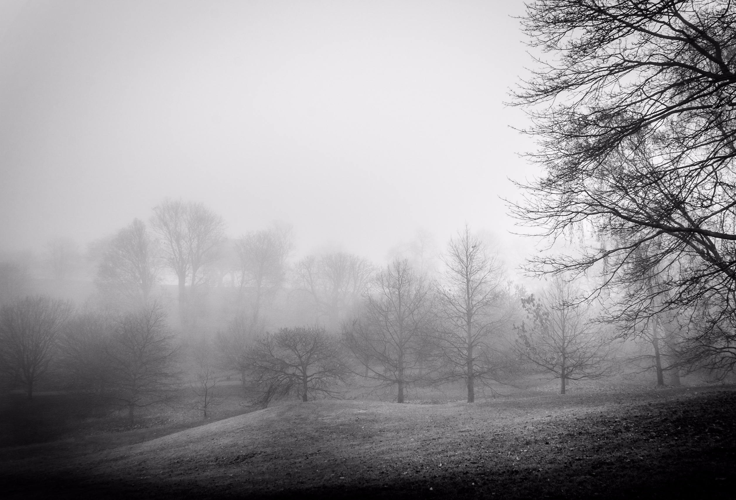 Royal Parks | |#foggy - Greenwich - fabianodu | ello