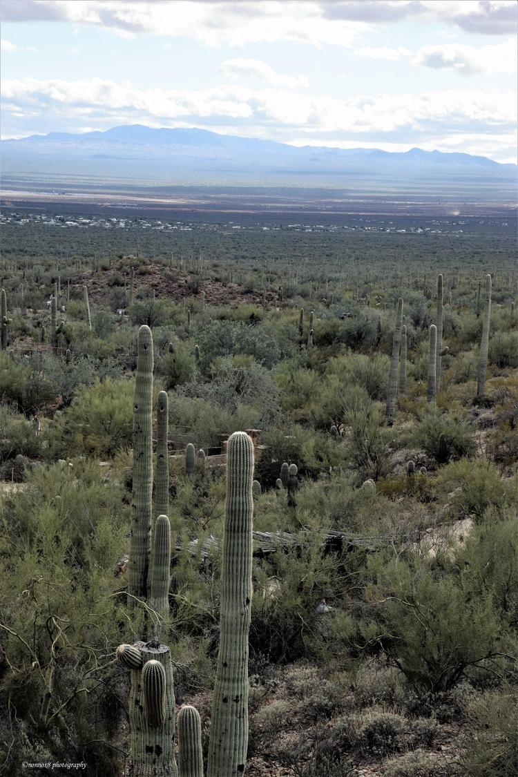 Tucson - nonnox8 | ello