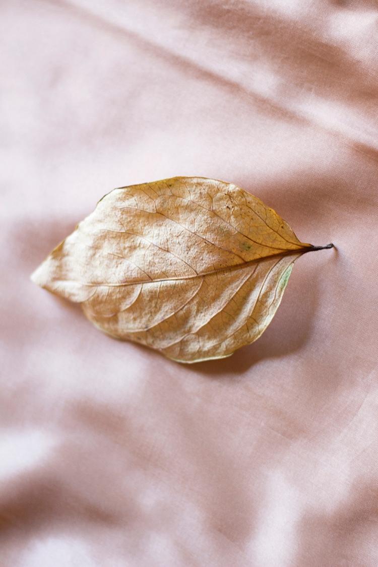 Autumn Beauty Roberta Gregorace - robertagregorace | ello