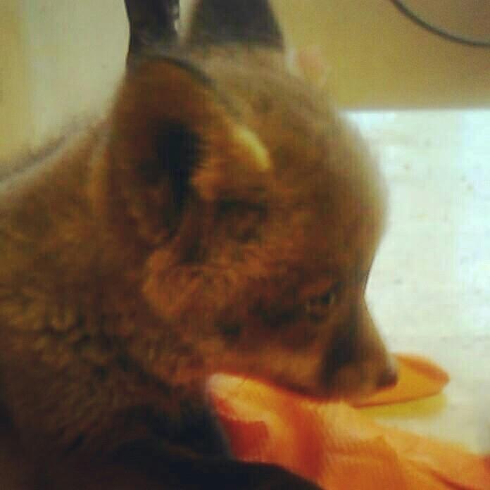 fox, animals, beautiful - skap_kap   ello
