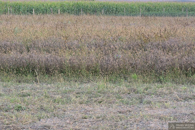 Fields Stripes II - photography - pawelwiesyk | ello