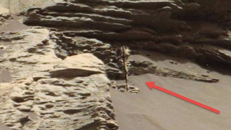 ¿Captó el Curiosity una planta  - codigooculto | ello