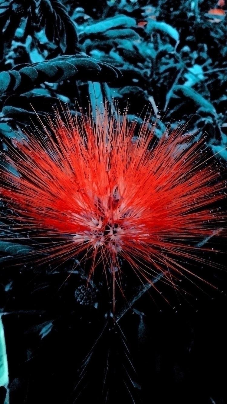 Red Flower Dark Jungle Apps - mikefl99 - mikefl99   ello