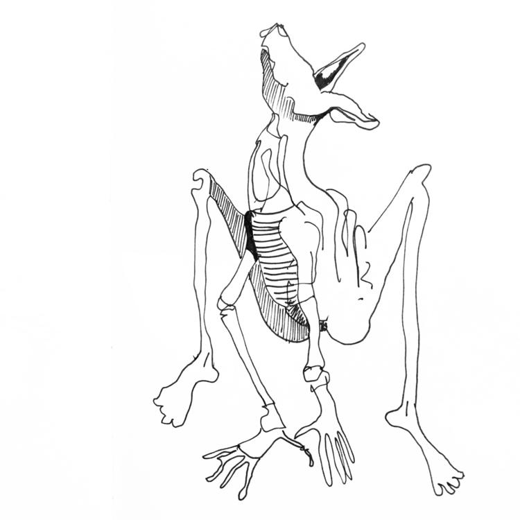 animalistic - johndoodles | ello