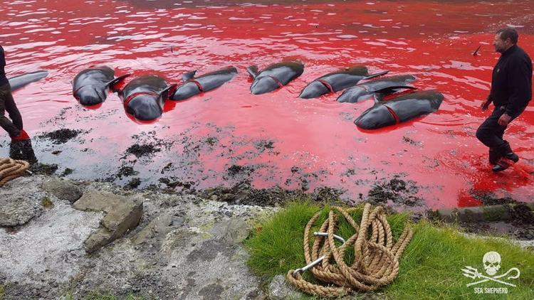 Más de mil doscientos ballenas  - codigooculto | ello