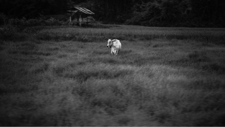 Daily scene - photography, monochrome - jinpei   ello