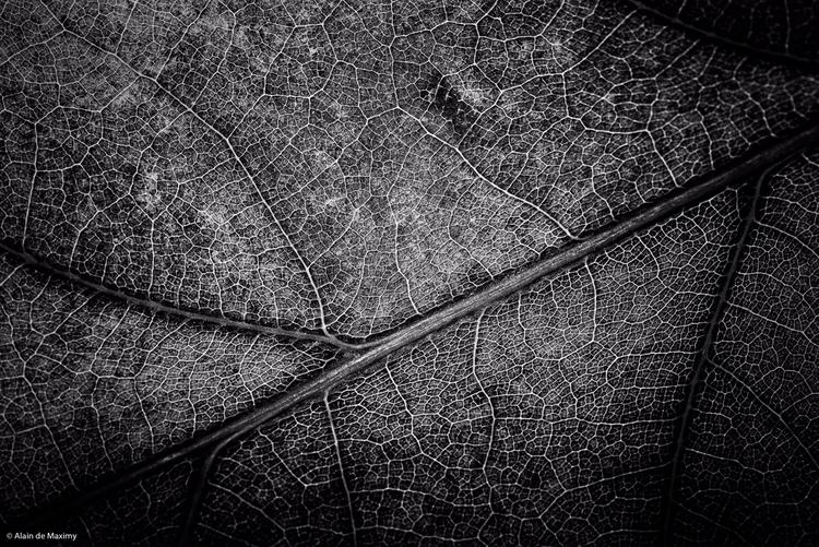 Macro Oak tree leaf autumn colo - maximy | ello