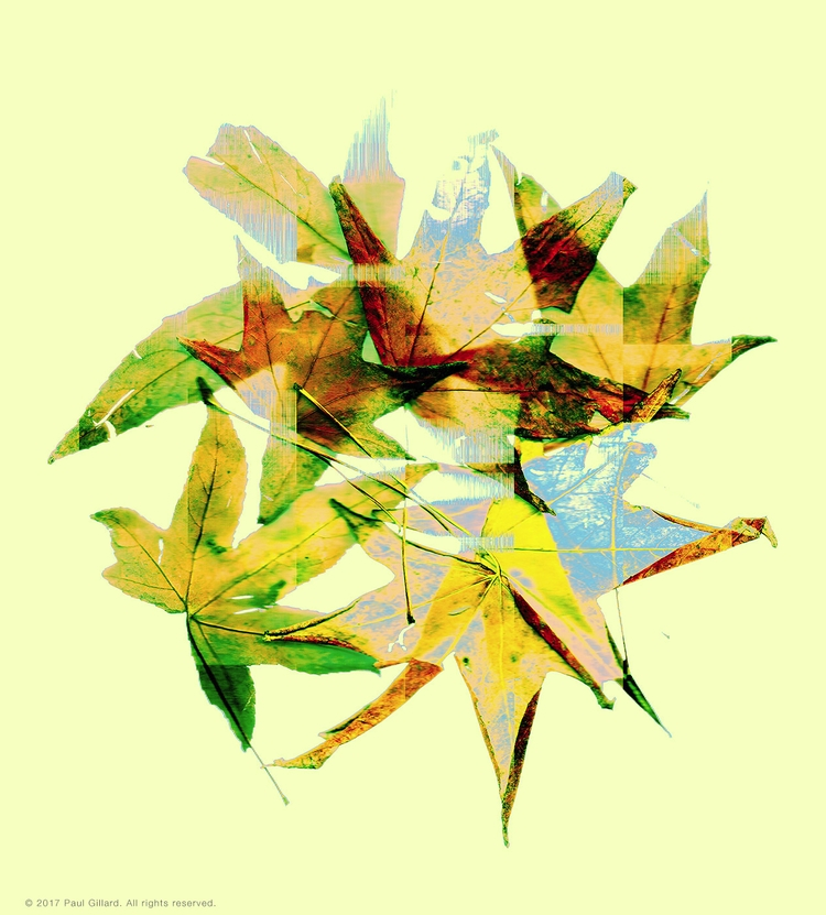 Title: Scanned Leaves - 002 - leaves - paulgillard | ello