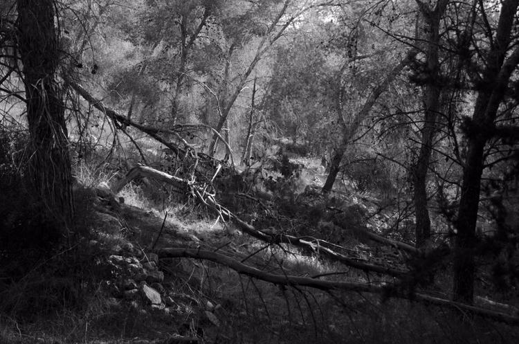 woods, forest, trees, BW, blackwhite - ydoron1 | ello