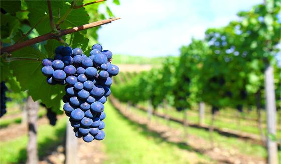 Organic-wine. González Bastias - ricardocarrascor | ello
