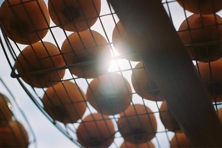 Persimmons dry sun Tourist Farm - mianlin | ello