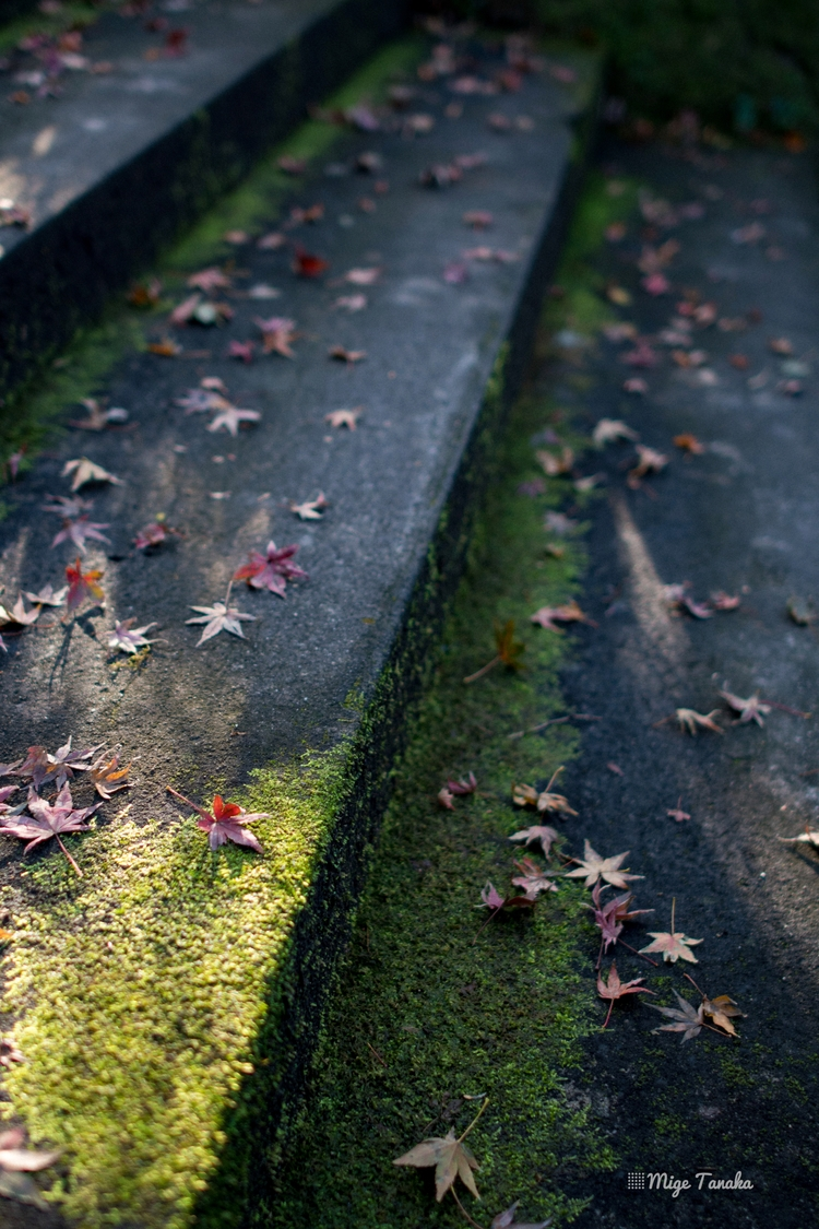 Deep Fall. Fukuoka / Japan - mige_tanaka | ello