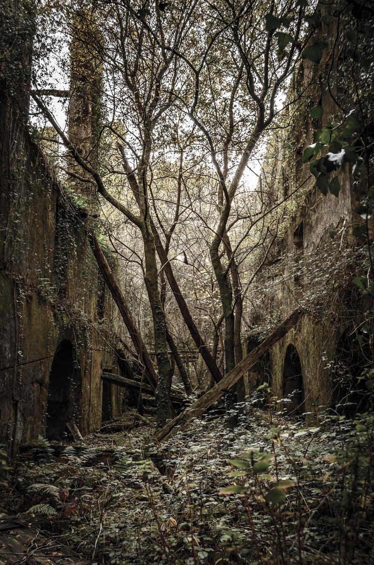 La vieja Fabrica - ruins, nature - santi_dieste | ello