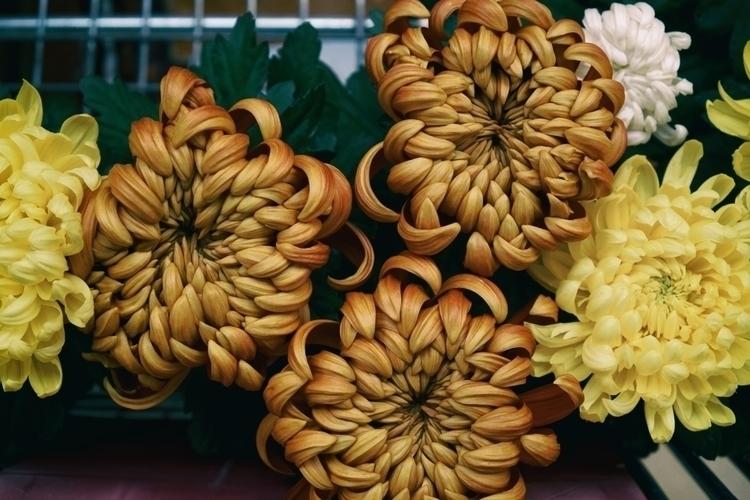 Suns - photography, flowers, bouquet - marcushammerschmitt | ello
