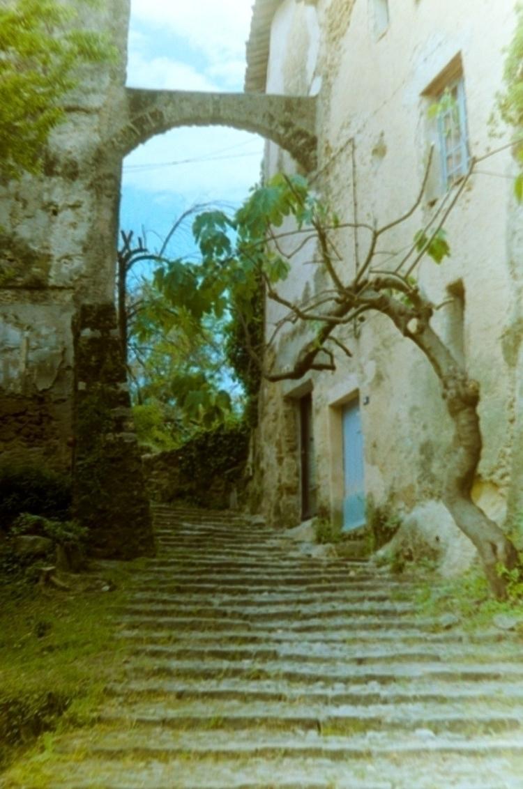 Cotignac, Provence Figue Tree,  - kiwiss | ello