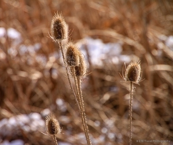 Field cattails - hiking, naturephotography - etbtravelphotography | ello
