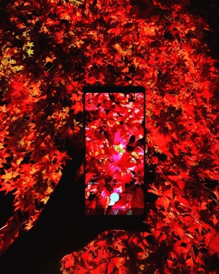 Passionate - red, 紅葉, galaxynote8 - sirius716 | ello