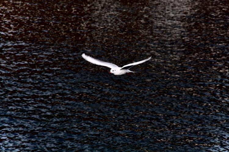 Flight - zlatko | ello