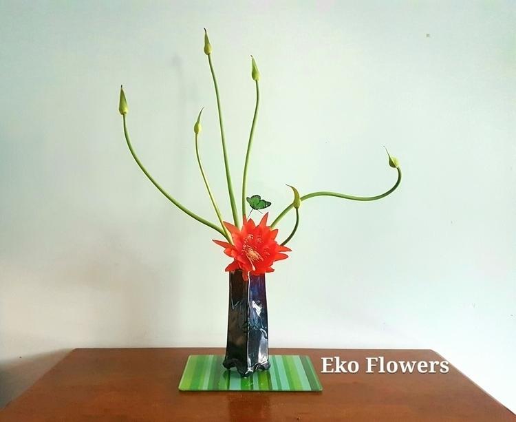 Spring Dance ... epiphyllum hyb - ekoflowers | ello
