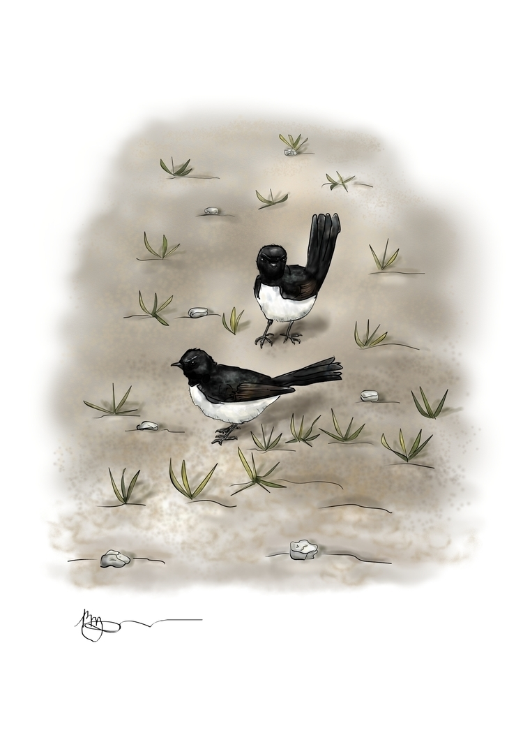Willie Wagtail - illustration, drawing - rachelj-1394 | ello