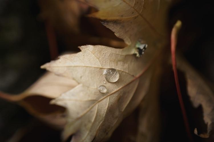 Huygens - photography, macro, fall - marcushammerschmitt | ello