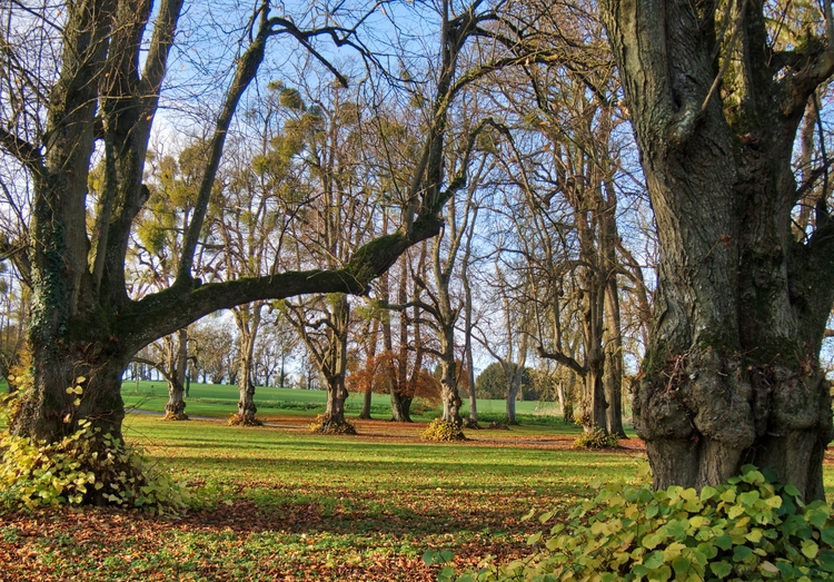 Trees - grounds Lainston House  - neilhoward | ello