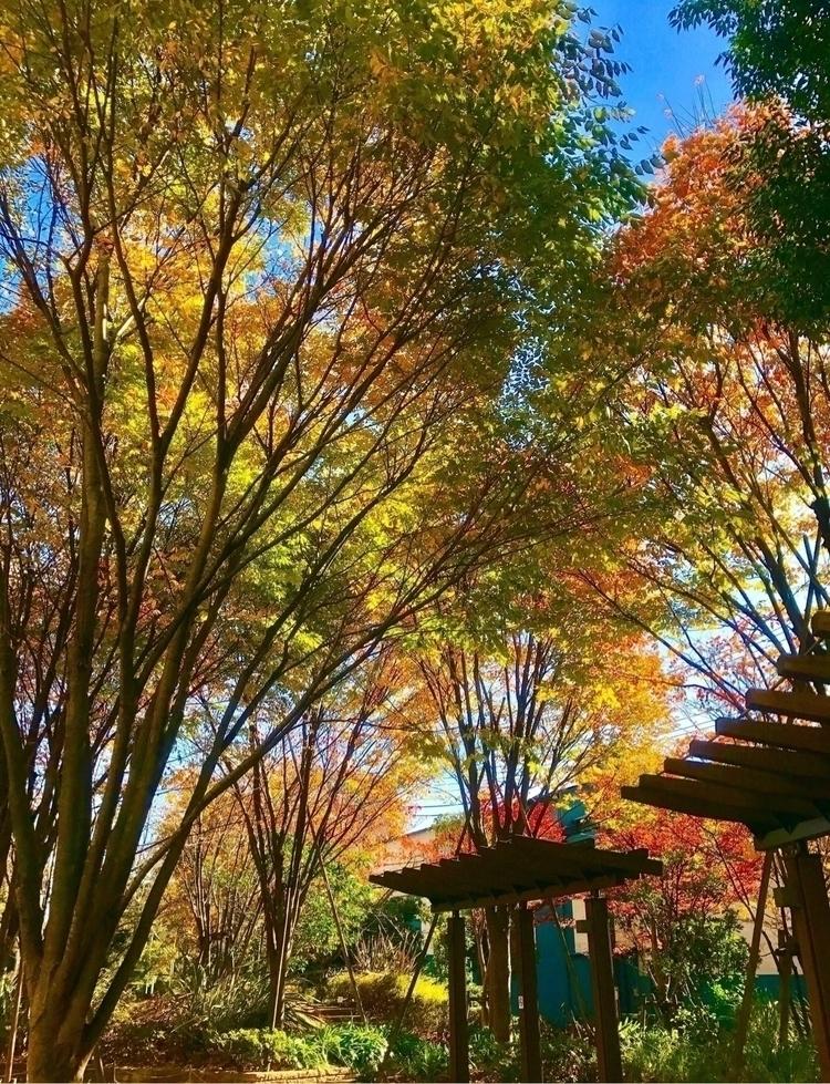 🧡:green_heart::yellow_heart - Autumn - mamimumemami | ello