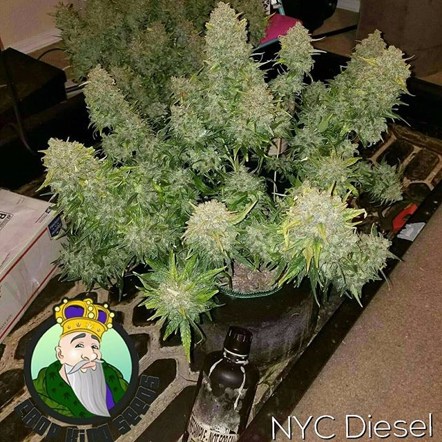 Crop King Seeds - cropkingseeds | ello