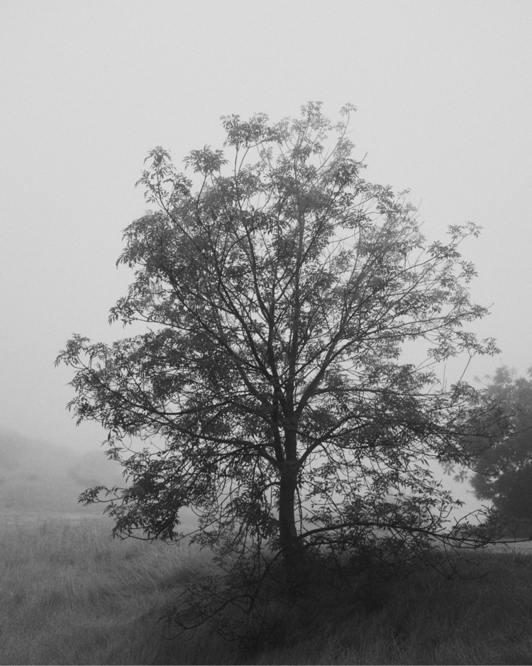 tree - blackandwhitephotography - jsrphotos | ello