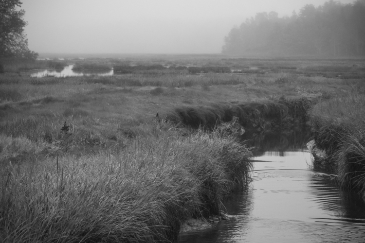 Weskeag Marsh, fog, South Thoma - stefanoaimone | ello