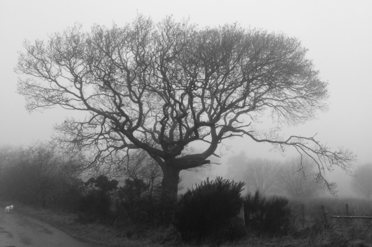 Misty Day - photography, blackandwhite - firehorsetextiles | ello