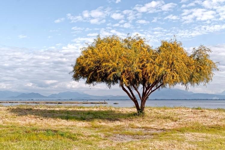 Blog Post: Tree Lagoon tree Lag - jackobo | ello