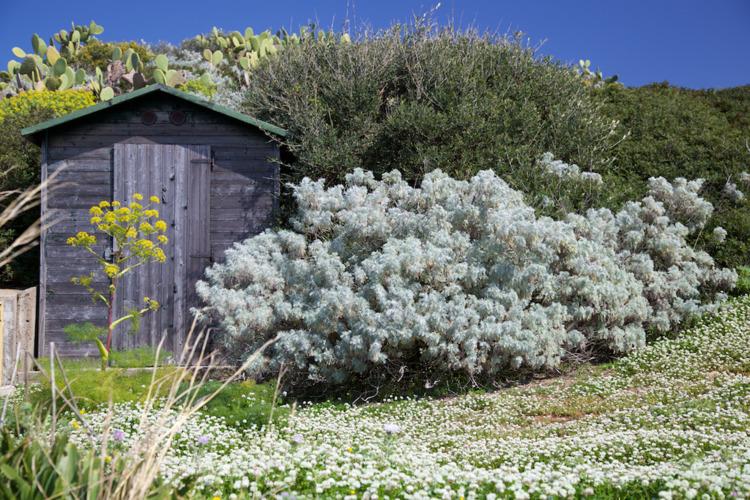 Smelling Home (Ustica, Sicilia - alexosinho | ello
