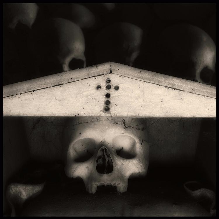 Skull (05) Augusto De Luca - AugustoDeLuca - augusto-de-luca | ello