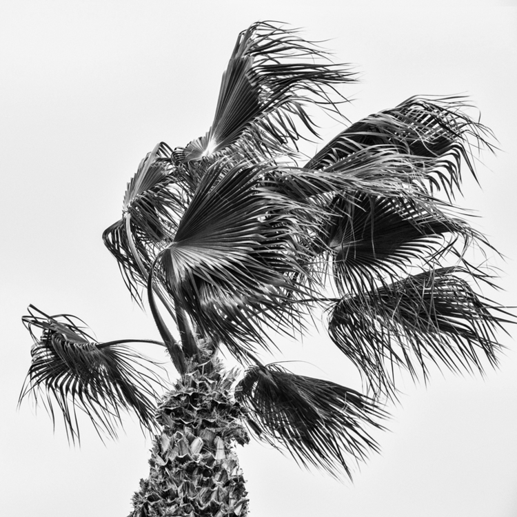 PALM Valencia, ESP, 2016 - photography - pezzido | ello