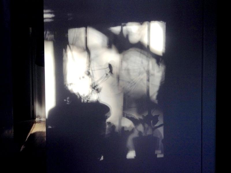 Fall Shadows - photo, gloom, shadows - dispel | ello