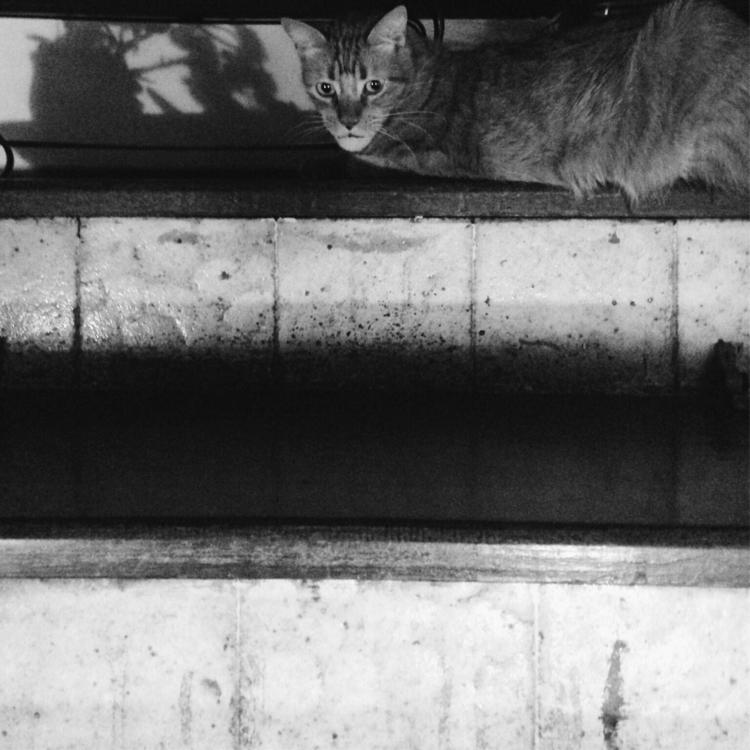 Antônio Augusto - cat, homeboy, blackwhite - victorgermano   ello