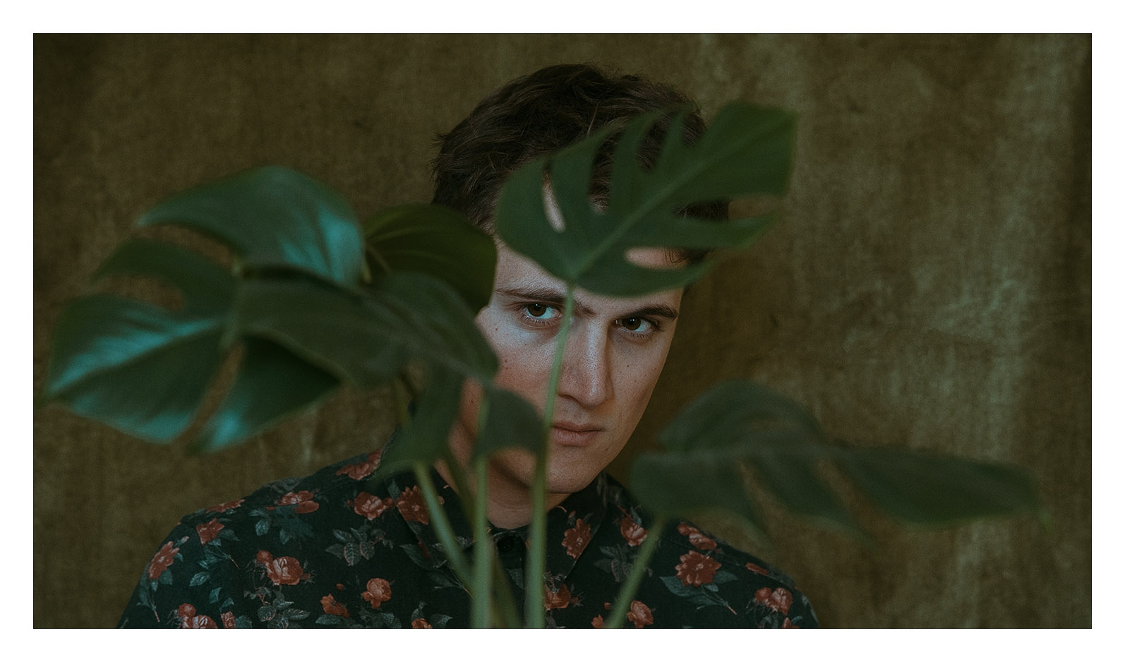 monstera - portrait - davidschermann | ello