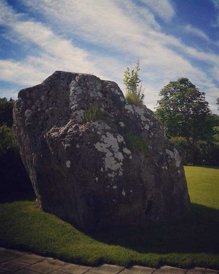 Litet träd på stor sten... Lill - skogskyrkogardar   ello